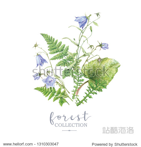 Watercolor highly detailed illustration with forest plants and bell flowers bouquet isolated on white background. Botanical arrangement can be used for scrap booking  boho wedding  greeting design