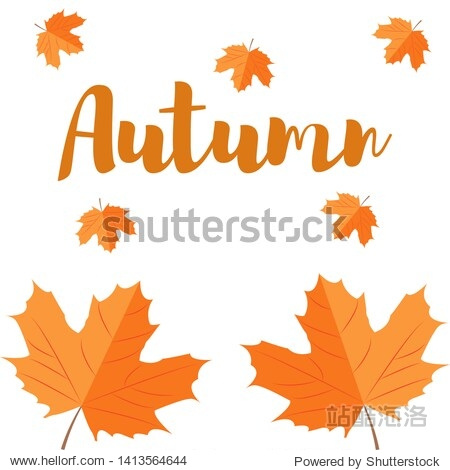 Autumn leaf. Autumn maple leaf isolated on a white background.  illustration