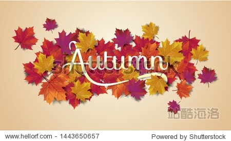 Autumn background layout typography decorate with leaves for greeting promo poster or web banner.Vector illustration template.