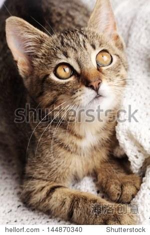 close-up of curious cat.