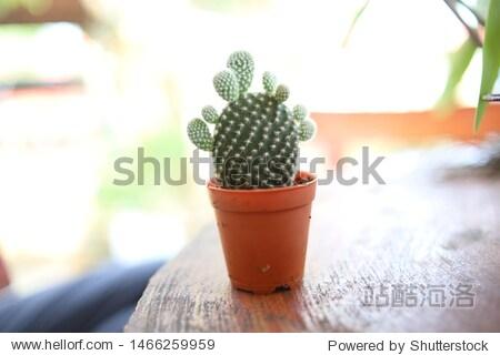 mini cactus for beauty decoration