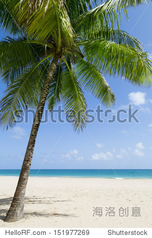 tropical sandy beach by the ocean with a palm tree