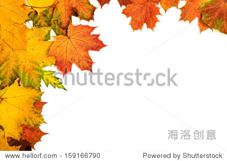 Frame from vivid colorful autumn leaves  natural seasonal background