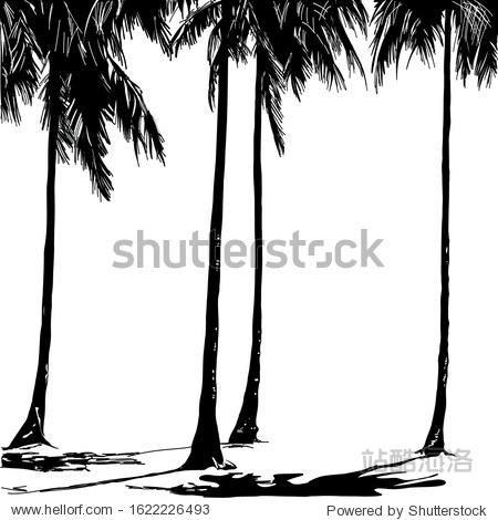 Sketch  tall beautiful palm trees and their shadow on the sand
