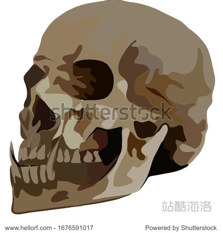 Sketch  profile of a human skull  with long fangs. Suitable for symbol  print  book  emblem  coloring