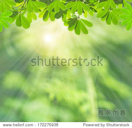 Green leaf in summer background