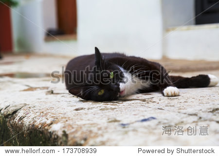 adorable black and white cat relaxing and posing on sidewalk