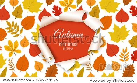 Autumn sale banner. Forest fall leaves with paper hole background. Seasonal discount  special price poster or flyer template. November nature design vector illustration