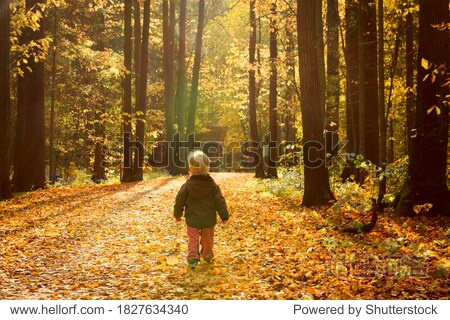 Little boy walk in autumn park wit dry yellow leaves