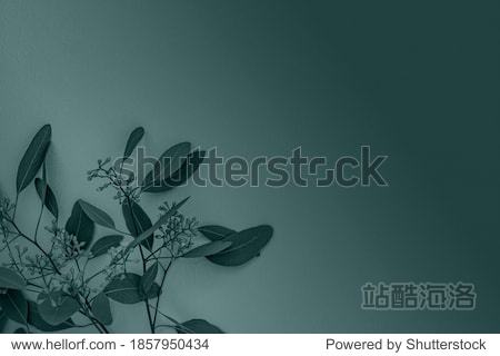 Eucalyptus twig with flowers in trendy blue green color toned. 2021 Color Trend Tidewater Green background