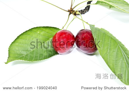 Sweet cherries with leaf  on white background