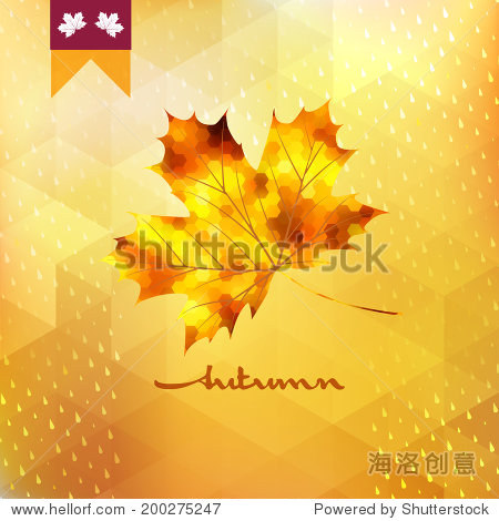 Autumn pattern with leaf. EPS 10 vector