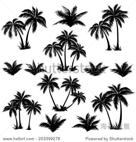 Set tropical palm trees with leaves  mature and young plants  black silhouettes isolated on white background. Vector