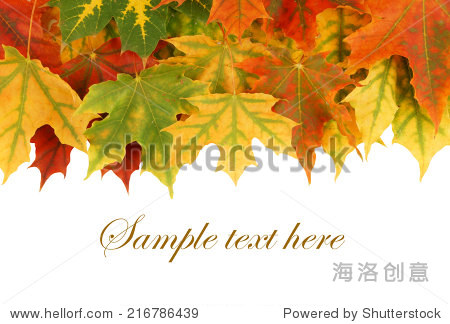 Maple leaves isolated on white