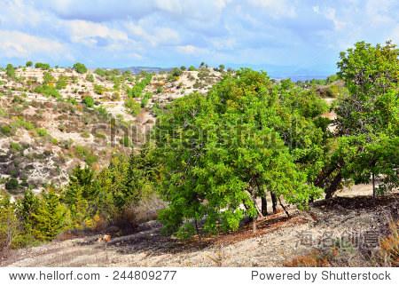 Mediterranean landscape in Paphos  Cyprus