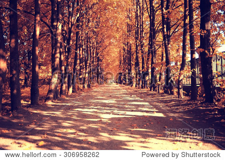 The path in the autumn forest