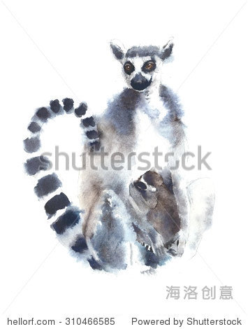 Lemur with baby  animal watercolor painting illustration isolated on white background