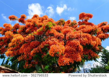 Exotic tree with orange flowers