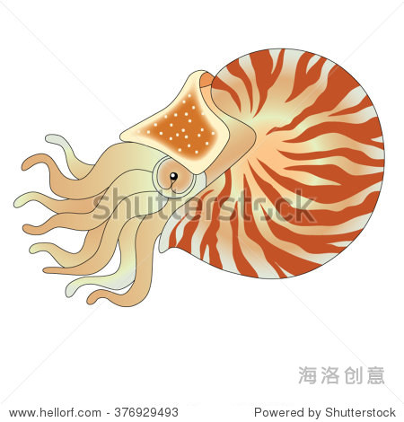 Nautilus vector illustration isolated