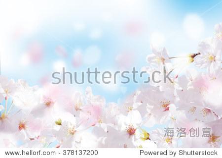 Beautiful cherry landscape