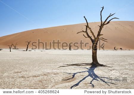 Dead trees in Deadvlei  Sossusvlei  Namibia  Africa.