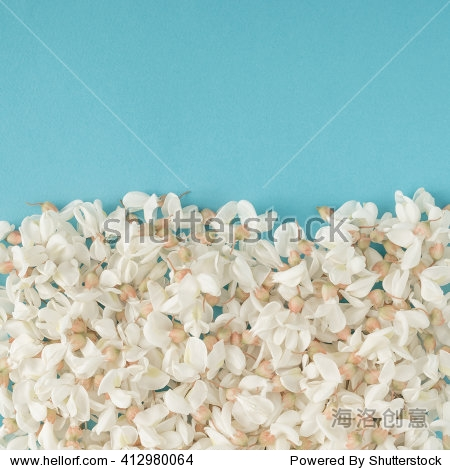 White flowers on blue background. Flat lay