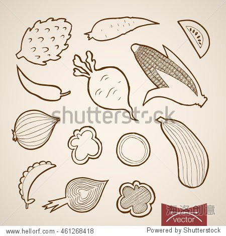 Engraving vintage hand drawn vector vegetable collection. Pencil Sketch corn  onion  tomato  squash  pepper  carrot  peas  radish  beet food illustration.