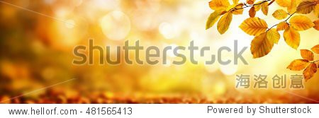 Autumn beech leaves decorate a beautiful nature bokeh background with forest ground  wide panorama format