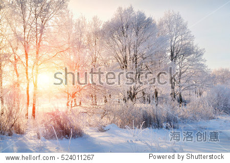 Winter landscape - frosty trees in snowy forest in the sunny morning. Tranquil winter nature in sunlight