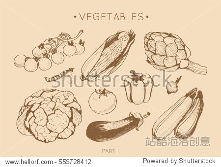 Collection of hand drawn vegetables  vector set in vintage style. Sketches of different food for menu or book of recipes  isolated
