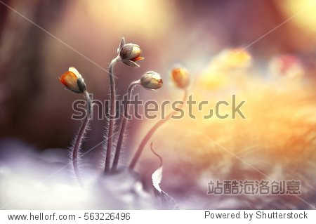 Spring bloom wallpaper. Group of wild flowers in forest on glade glow in sun on yellow and golden background macro. Spring border template floral background. Gentle air amazing magic artistic image.