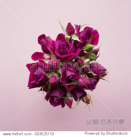 Bouquet of purple roses on a pink background. Flat lay