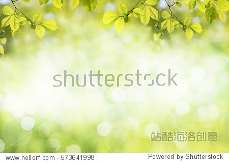Fresh green tree leaves  frame. Natural background.