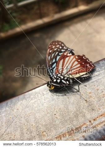 sleeping butterfly like dead