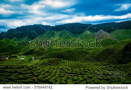 Cameron highlands pahang Malaysian. destination visitor