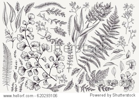 Set with leaves. Botanical illustration. Fern  eucalyptus  boxwood. Vintage floral background. Vector design elements. Isolated. Black and white.