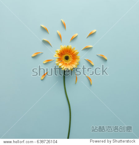 Yellow flower on bright blue background with petals. Emotion concept. Summer flat lay.