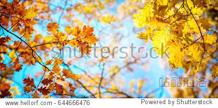 Autumn landscape. Autumn oak leafes  very shallow focus