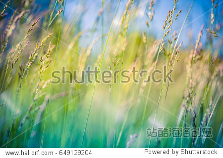 Beautiful close up ecology nature landscape. Nature meadow. Abstract meadow background. Flowering green forest spring summer sunlight. Blurry forest background with copy space. Nature concept.