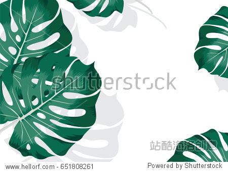 Trendy summer tropical minimalistic white background with Monstera Deliciosa  palm leaf  exotic green jungle leaves