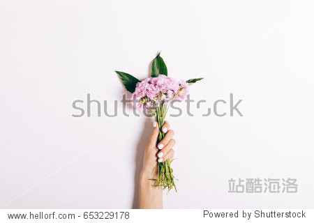Small bouquet of pink carnations in a female hand with a manicure on a white background  close-up