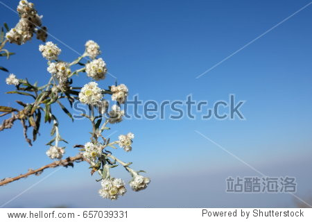 Flower on the blue sky