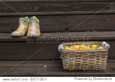 Apricot  oranges and limes in wicker basket with ceramic hand painted handles  ladies rubber garden shoes