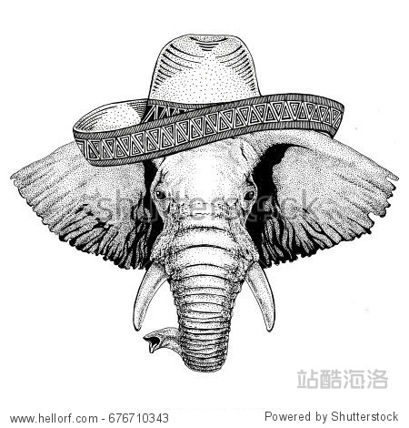 African or indian Elephant Wild animal wearing sombrero Mexico Fiesta Mexican party illustration Wild west