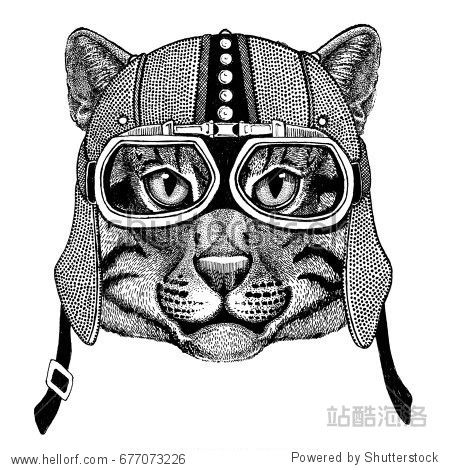 Wild cat Fishing cat Motorcycle  biker  aviator  fly club Illustration for tattoo  t-shirt  emblem  badge  logo  patch