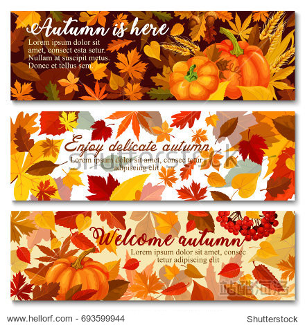 Autumn pumpkin with fallen leaf banner set. Orange maple leaf  pumpkin vegetable  ripe wheat and branch with acorn and rowanberry greeting card for Thanksgiving Day or autumn season harvest design