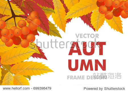 Autumn background with branch of rowan  berries and leaves. Frame fall. Vector illustration.