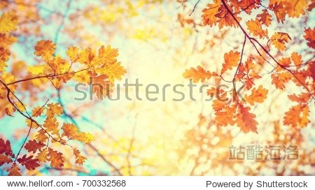 Autumn landscape. Autumn tree leaves sky background.