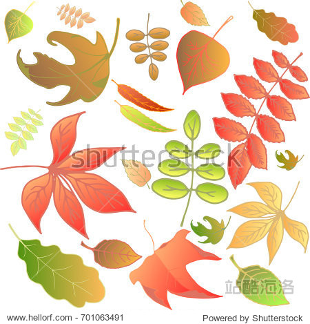Autumn leaves set  isolated on white background.Vector illustration.