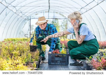 Gardeners selecting plants in a greenhouse. Finalizing phone order from a client. Team work concept.